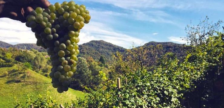 L'Unesco incorona il prosecco italiano, ma attenzione ai pesticidi